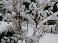 2010-01-13-030